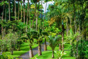 Guadeloupe jardin